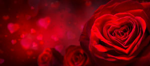 Saint Valentin - Hoeve Dewalleff